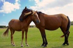 新的森林母马和驹 免版税图库摄影