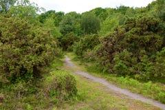 新的森林,汉普郡,英国 免版税图库摄影