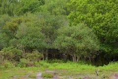 新的森林,汉普郡,英国 免版税库存照片