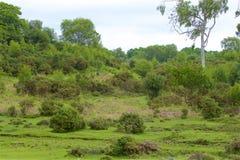 新的森林,汉普郡,英国 库存照片