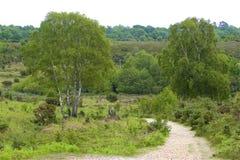 新的森林,汉普郡,英国 库存图片