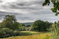 新的森林,汉普郡,英国 图库摄影
