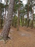 新的森林 免版税库存照片