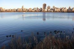 新的池塘约克 库存照片