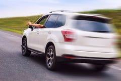 新的汽车愉快的所有者乘坐高速公路并且显示赞许 免版税库存图片