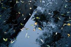 新的沥青弄湿了 免版税库存照片
