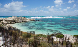新的沿海成长 库存图片