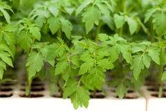 新的温室植物 免版税库存照片