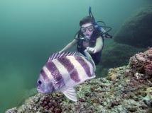 新的潜水者热情 免版税库存图片