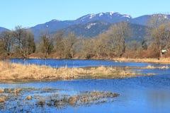 新的生态系和自然 免版税库存照片