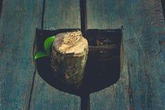 新的生活和想法概念:通过生长从在葡萄酒样式的树桩的绿色新芽树 库存照片