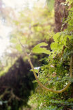 新的生活、叶子和叶子 免版税库存照片