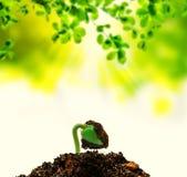 新的生活出生的植物 免版税库存照片