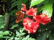 新的生活!烘干它的蝴蝶是翼 免版税库存照片