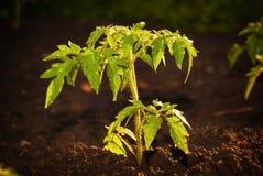 新的生活生态植物。 库存图片