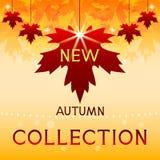 新的秋天收藏。与槭树叶子的背景。 免版税库存图片