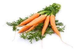 新的红萝卜 库存照片