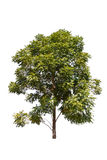 新的结构树 免版税库存图片