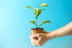 新的绿色树新芽在土壤的在蓝色背景的人的手上 环境保护的概念 变褐环境叶子去去的绿色拥抱本质说明说法口号文本结构树的包括的日地球 免版税库存照片