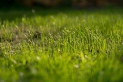 新的草在庭院里增长外面 免版税库存照片