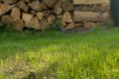 新的草在庭院里增长外面 库存图片