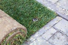 新的草坪的展开的草皮 免版税库存图片