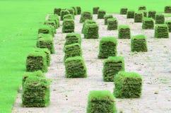 新的草坪 免版税库存图片