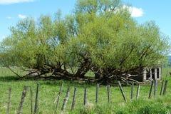 新的草甸,爱达荷历史谷仓 图库摄影