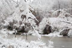 新的雪秋天在冬天森林里 免版税图库摄影