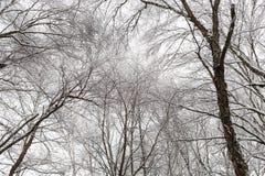 新的雪秋天在冬天森林里 库存照片