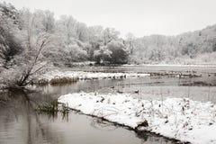 新的雪秋天在冬天森林里 库存图片