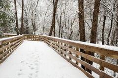 新的雪秋天在冬天森林里 免版税库存照片