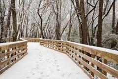 新的雪秋天在冬天森林里 免版税库存图片
