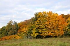 新的颜色在森林里 图库摄影