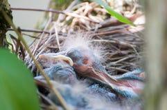 新的鸟 免版税库存照片