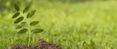 新的绿色生活 免版税库存照片