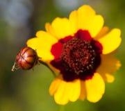 新的黄蜂 库存照片