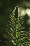 新的growth1 库存图片