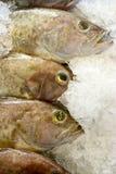 新石斑鱼市场 库存图片