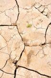 新破裂的地球的寿命 免版税图库摄影