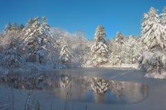 新积雪的pi包围的一个新近地结冰的森林池塘 免版税库存图片