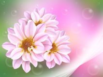 新粉红色 免版税库存图片