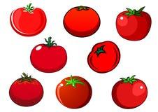 新红色被隔绝的蕃茄菜 免版税图库摄影