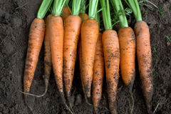 新红萝卜新的收获 免版税图库摄影