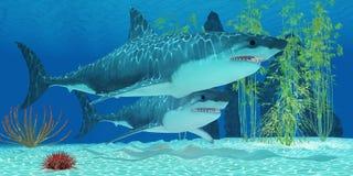 更新纪Megalodon鲨鱼 图库摄影