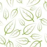 新绿色叶子纹理 库存照片