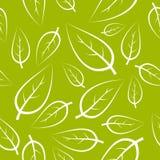 新绿色叶子纹理 免版税库存照片
