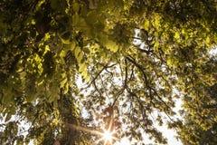 新绿色在森林在中部的离开构筑太阳和 免版税库存照片