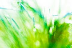 新绿色春天摘要背景纹理 免版税图库摄影