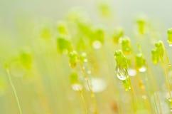 新绿色青苔本质 库存图片